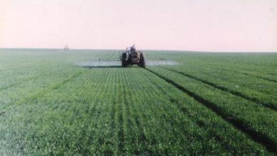 Photo of تحالف مزارعي الجزيرة يحذر من سياسات البنك الزراعي