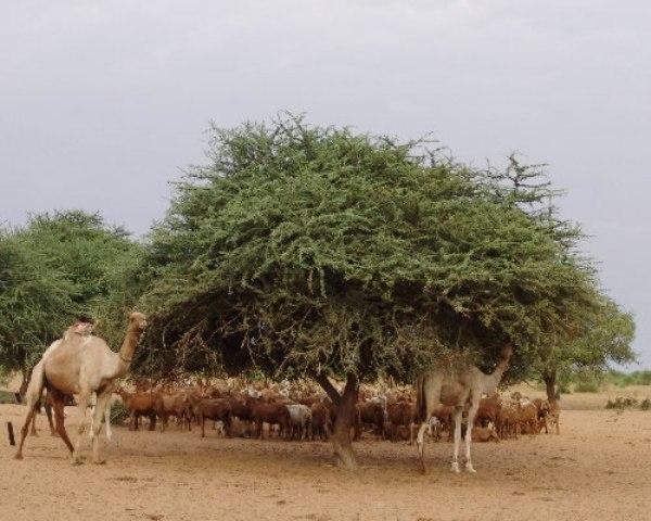 مدير الغابات: السودان فقد 100 مليون فدان من مساحاته الغابية بعد انفصال الجنوب.