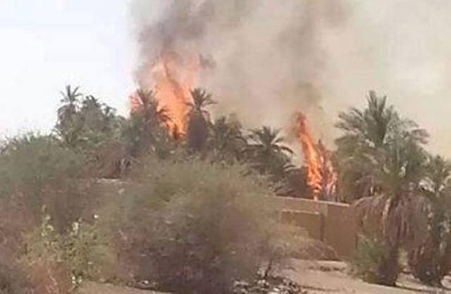 حريق يلتهم المئات من أشجار النخيل المثمرة شمال السودان