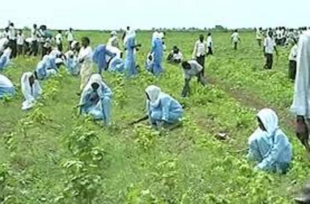 تحالف المزارعين يعقد لقاءات جماهيرية للتنوير بخطورة تعديلات قانون الجزيرة