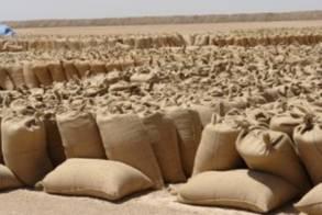 مدير البنك الزراعي: مخزون القمح الإستراتجي يكفي (90) يوماً