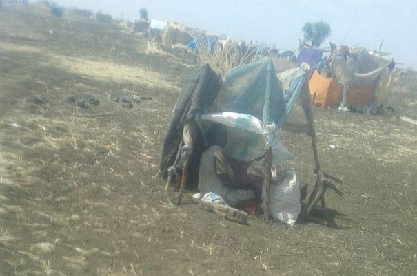"""مركز النيل الأزرق لحقوق الإنسان"""": 6000 أسرة تُقتلع من جذورها بالإنقسنا"""""""