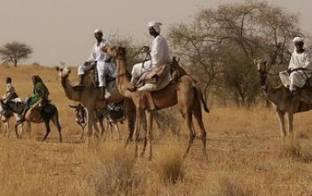مسلحون يحتجزون مدير جهاز الأمن بشرق دارفور وينهبون مسكنه