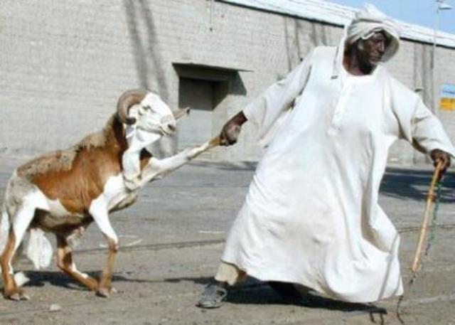 الضحية غير واجبة.. لا على الفقراء!! ولا على الأغنياء!! (1/2)