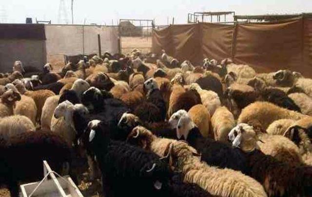 """""""تلاتة"""" ملايين """"ضبانة"""" تهاجم فتوى علماء السودان!"""