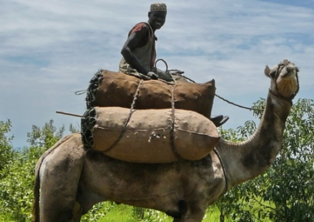 محلية بورتسودان تتحصل 350 جنيهاً من التجار لصالح النظام العام