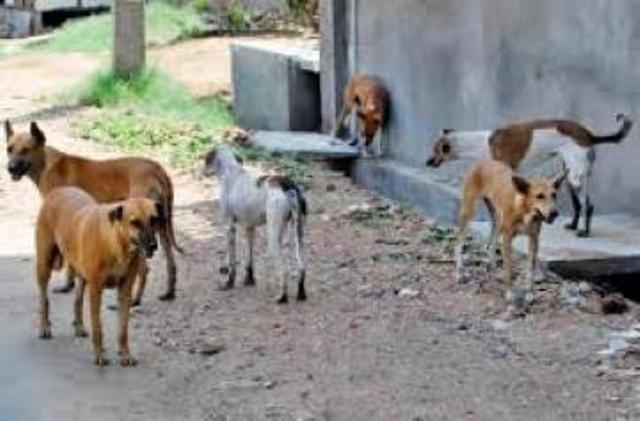 الشرطة ترهن إبادة كلاب ضالة بتصديق من النيابة