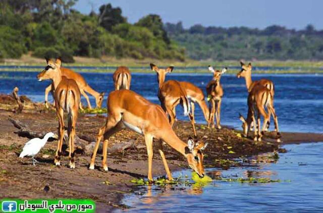 الدندر أكبر محمية طبيعية في أفريقيا
