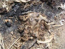 """حرق مخلفات للاسماك بالقرب من أحياء سكنية """"ببورتسودان"""""""
