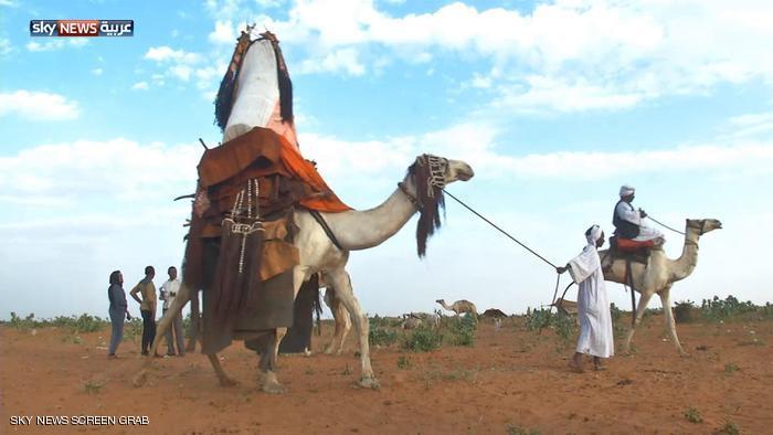 """"""" الهودج"""" لا يزال وسيلة للتنقل في بوادي السودان"""