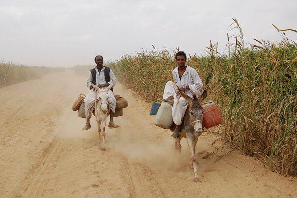 """مزارعون يستنكرون استغلال الحكومة""""للزكاة"""" في جباية الأموال"""