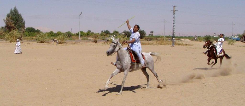 المهدي: مؤامرة في استبعاد خيولنا من السباقات الدولية