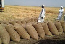 صورة السودان: فقدان 460 مليون دولار سنويا لسوء وانعدام المواعين التخزينية