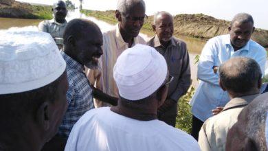 صورة السودان: قرارات مشددة حول زراعة القمح وزيادة المساحة المزروعة بالجزيرة