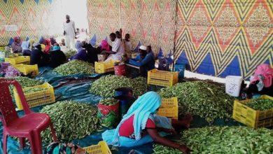صورة السودان يبدأ تصدير منتجاته الزراعية إلى أوروبا